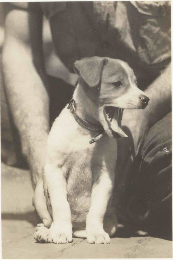 """Cucumber, aboard the USS Cumberland Sound AV-17. 1945. Cucumber, the dog, belonged to Art Dietz MoM 2/c. He obtained it (?) in Tacoma before AV-17 Commissioning. Someone told Art to bite the tip of the tail because it was bent. Cuke had the run of the ship for 4 or 5 weeks but she began to avoid everyone besides Art; she got sick from so many sailors feeding her ice cream and candy bars. She was still on board in Hawaii. I don't remember when I last saw her. Paul """"J"""" Dunn, former ETM 1/c"""